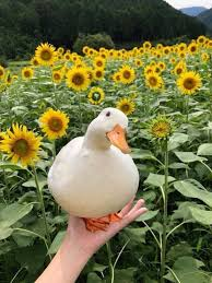 Name:  duck_in_hand.jpg Views: 32 Size:  12.9 KB