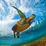 Sea Turtle's Avatar